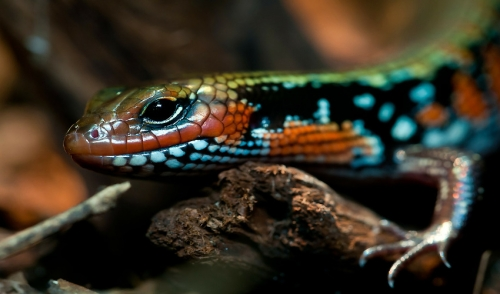 Common Reptile Diseases and Solutions