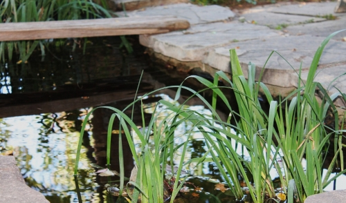 Tips on Opening Your Pond in the Spring