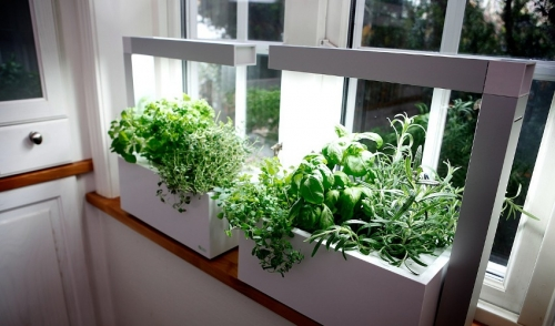 Starting a Hydroponic Garden: Tips for Beginners