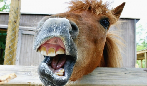 Keeping Your Horse's Teeth Healthy