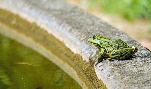 Tips To Close Your Pond For The Winter