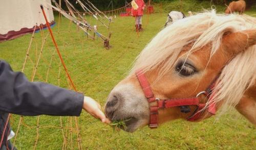 Treats Your Horses Will Love