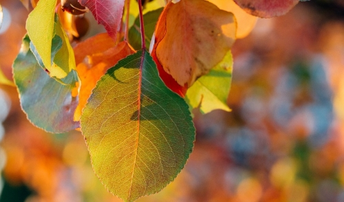 Turning Leaves into Soil Conditioner