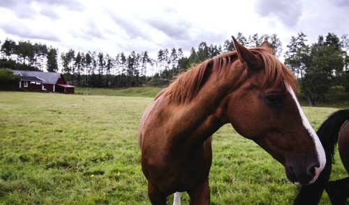 What to Do If Your Horse Has Parasites