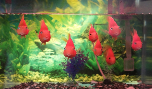 Good Bacteria: The Benefits It Can Have on Your Fish