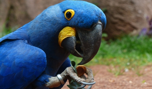 Parrot Beak Care 101