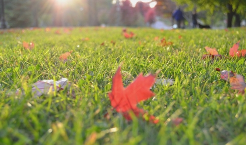 Caring For Your Lawn In The Fall