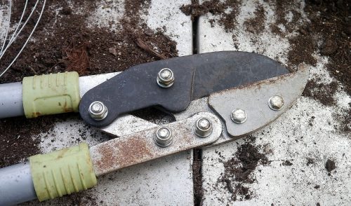Five Steps To Making Your Pruners Like New Again