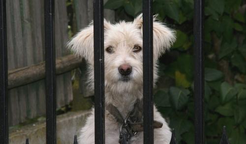 The Basics Of Invisible Dog Fences