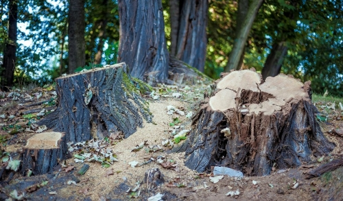 Three Steps To Getting Out That Pesky Stump