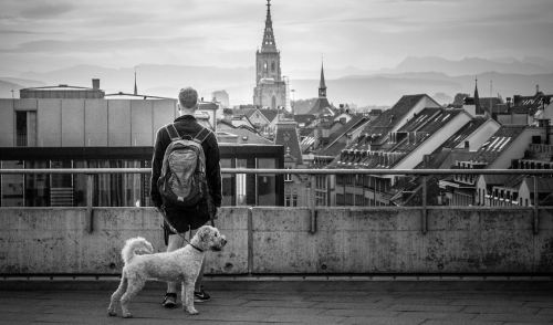 Three Things For Finding A Pet Friendly City