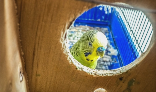 Tips For Bathing Your Pet Bird