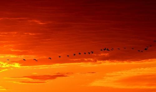Bird Migration Schedule
