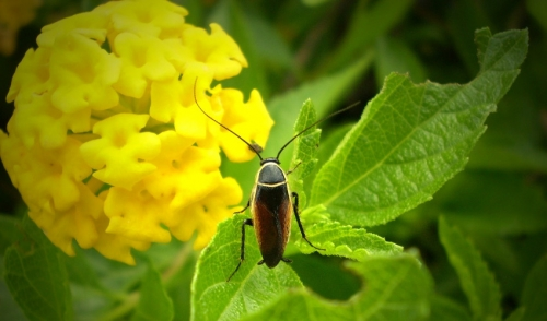 What Is Bugging Your Garden?