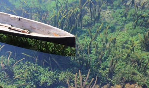 Algae Control for Pond