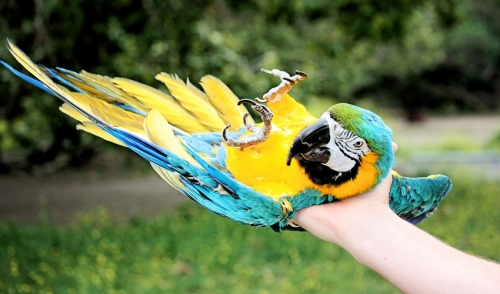 Selecting The Right Pet Bird For Kids