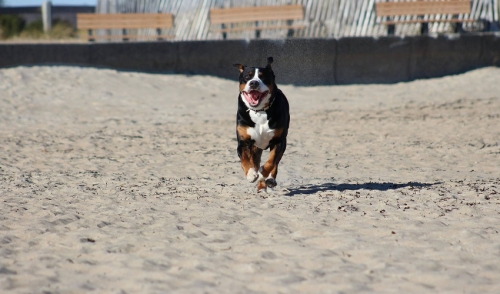 Summer Exercise Ideas to Enjoy With Your pet