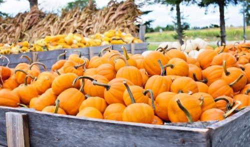 How to Make Pumpkin Planters