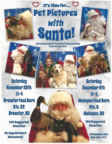 Pet Pictures With Santa- Mahopac Image