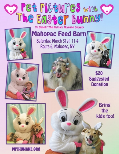 Pet Pictures With The Easter Bunny - Mahopac