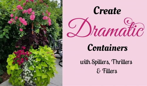 Create Dramatic Containers with Spillers, Thrillers & Fillers