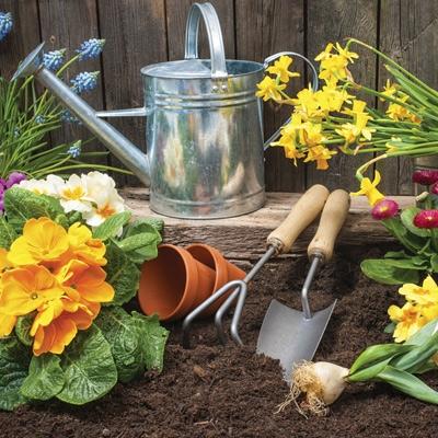 Plant Fertilizers