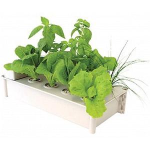 HydroFarm® Hydroponic Salad Garden Kit