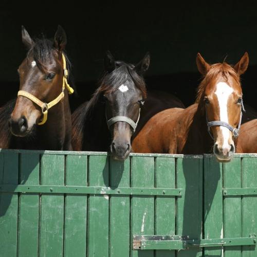 Farm & Equine
