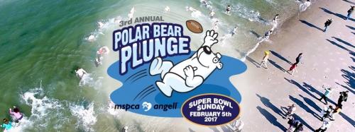 MSPCA Polar Bear Plunge