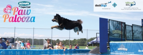 Paw Palooza: The Cape's Largest Dog Festival