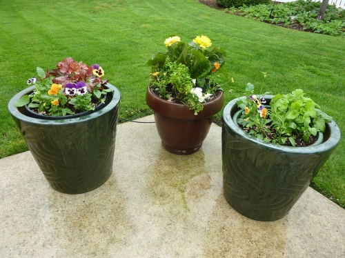 What's Trending in Container Gardening Workshop & Demo