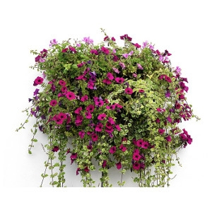 10% Off All Hanging Baskets