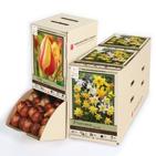 50% Off Flower Bulbs - Assorted Packs