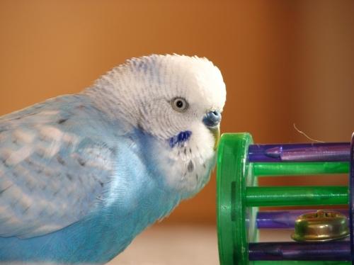 25% Off Bird Toys