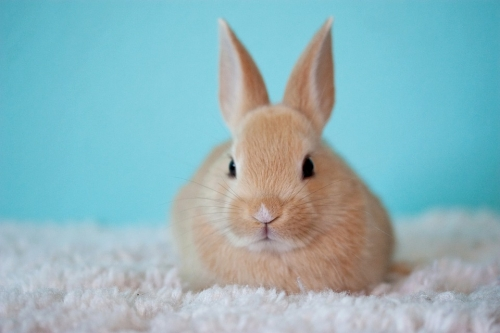 $10 Off Pet Rabbits