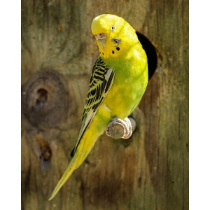 Parakeet- 50% Off With Purchase of Select Cages