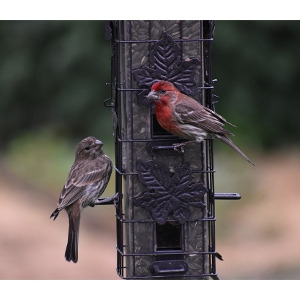 $5 Off Any Bird Feeder Over $39.99