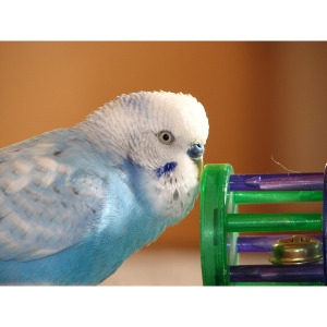 25% Off Any One Bird Toy