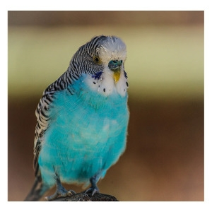 10% Off Any One Parakeet