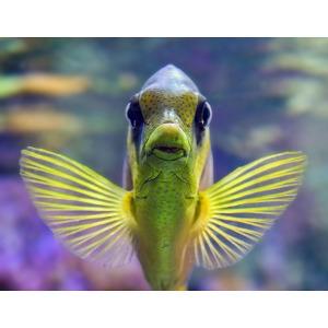 Any Aquarium Fish - BOGO 1/2 Off