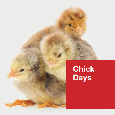 Chick Days at H.C. Summers