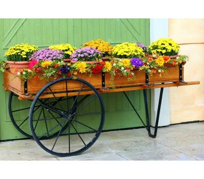 Fall Garden Mums Special