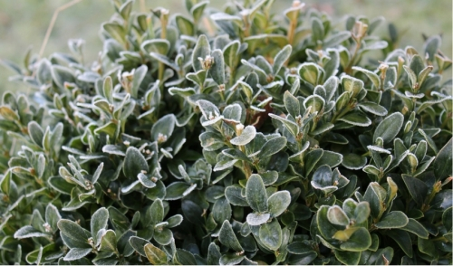 From Our Experts at Lakeland Yard & Garden: Your January 2017 To Do List