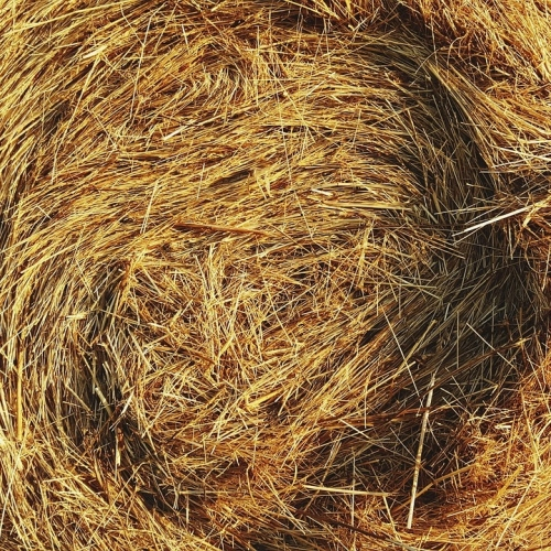 $0.75 off/bale Local Grass Hay w/ 20+ bales