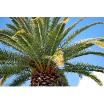 All Palm Trees On Sale