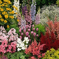 Save on Our Perennials