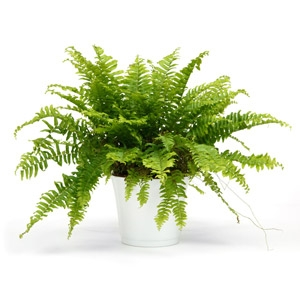 Select Indoor Houseplants