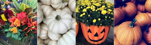 Everything You Need for Fall Decorating!