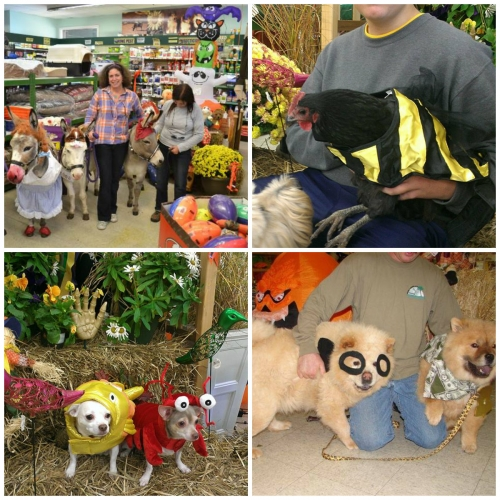 Annual Dress Your Pet for Halloween Costume Contest
