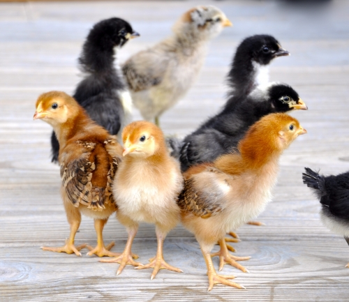 Purina Poultry Seminar